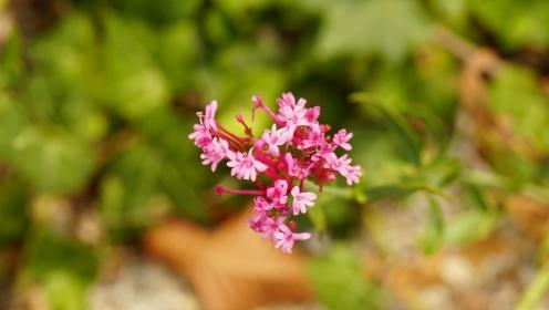 Some flora impressions