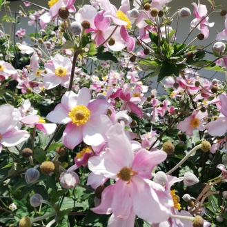Nice flowers at castle Schlanders