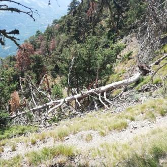 Bizzare death trees