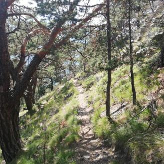 Nice paths along the mountain