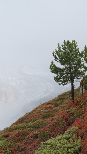 Misty first view on the glacier