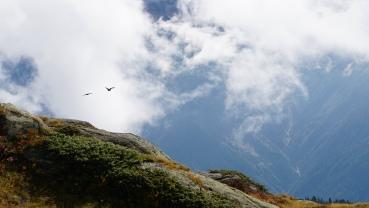 Birds flying high ...